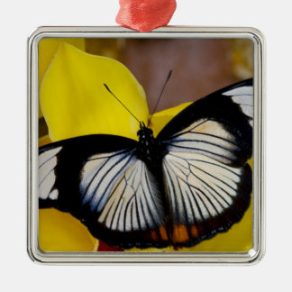 Sammamish, Washington. Tropical Butterflies 62 Christmas Ornament