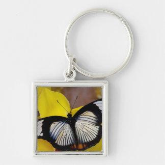 Sammamish, Washington. Tropical Butterflies 62 Keychains