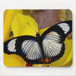 Sammamish, Washington. Tropical Butterflies 62 Mouse Mat