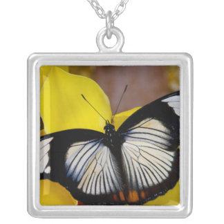 Sammamish, Washington. Tropical Butterflies 62 Square Pendant Necklace