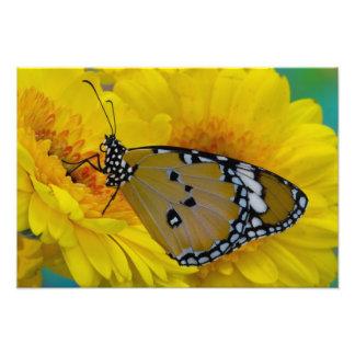 Sammamish, Washington. Tropical Butterflies 63 Art Photo