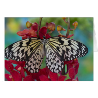 Sammamish, Washington. Tropical Butterflies 63 Card