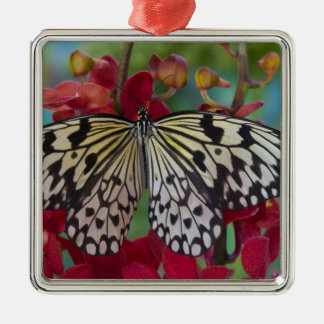 Sammamish, Washington. Tropical Butterflies 63 Christmas Ornament