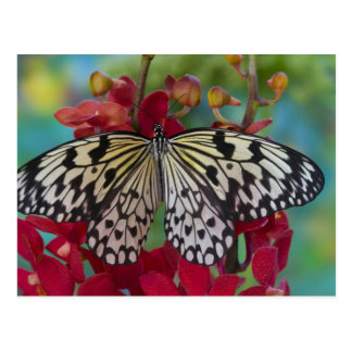 Sammamish, Washington. Tropical Butterflies 63 Postcard