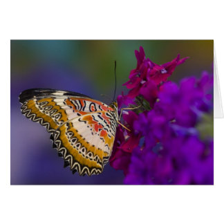 Sammamish, Washington. Tropical Butterflies 64 Card