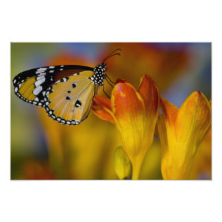Sammamish, Washington. Tropical Butterflies 64 Photo Print