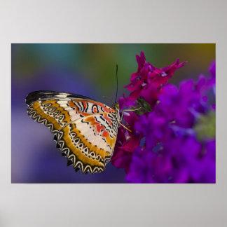 Sammamish, Washington. Tropical Butterflies 64 Poster