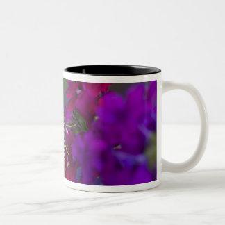 Sammamish, Washington. Tropical Butterflies 64 Two-Tone Coffee Mug