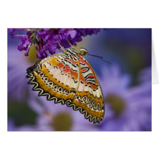 Sammamish, Washington. Tropical Butterflies 65 Card