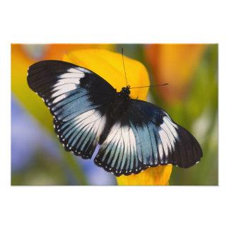 Sammamish, Washington. Tropical Butterflies 65 Photographic Print