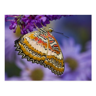 Sammamish, Washington. Tropical Butterflies 65 Postcard