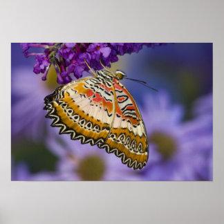 Sammamish, Washington. Tropical Butterflies 65 Poster