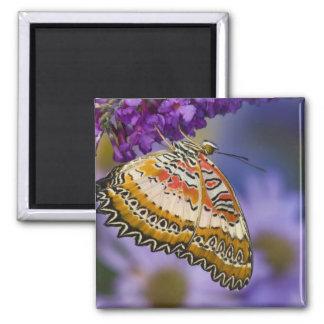 Sammamish, Washington. Tropical Butterflies 65 Square Magnet