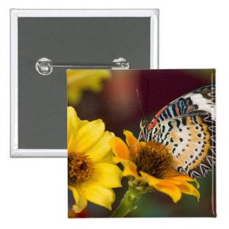 Sammamish, Washington. Tropical Butterflies 66 Pinback Button