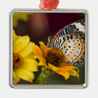 Sammamish, Washington. Tropical Butterflies 66 Christmas Ornament