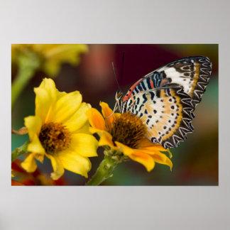 Sammamish, Washington. Tropical Butterflies 66 Poster