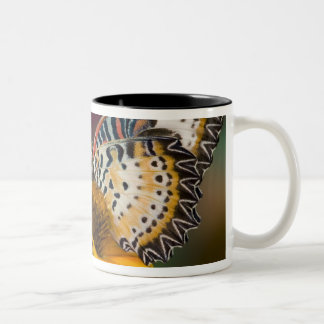 Sammamish, Washington. Tropical Butterflies 66 Two-Tone Coffee Mug