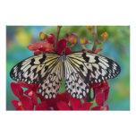 Sammamish, Washington. Tropical Butterflies 67 Photograph