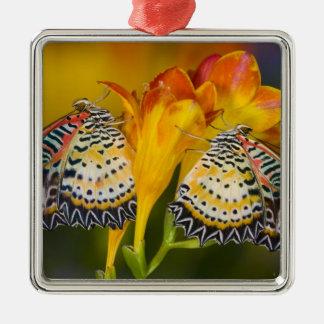 Sammamish, Washington. Tropical Butterflies 68 Christmas Ornament