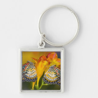 Sammamish, Washington. Tropical Butterflies 68 Key Ring
