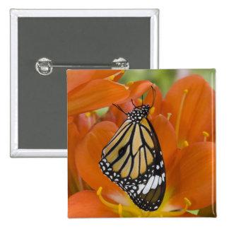 Sammamish, Washington. Tropical Butterflies 69 Button
