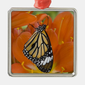 Sammamish, Washington. Tropical Butterflies 69 Christmas Ornament