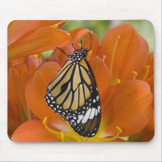 Sammamish, Washington. Tropical Butterflies 69 Mouse Mat