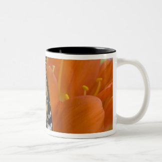 Sammamish, Washington. Tropical Butterflies 69 Two-Tone Coffee Mug