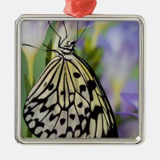 Sammamish, Washington. Tropical Butterflies 6 Christmas Ornament