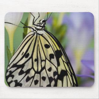 Sammamish, Washington. Tropical Butterflies 6 Mouse Mat