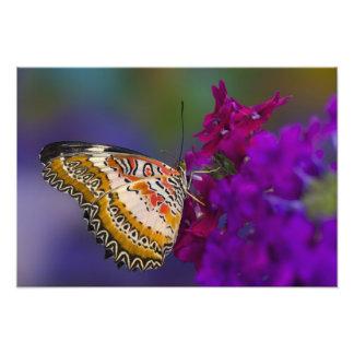 Sammamish, Washington. Tropical Butterflies 6 Photographic Print