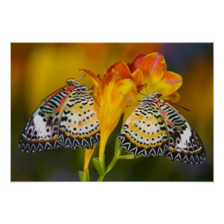 Sammamish, Washington. Tropical Butterflies 6 Poster