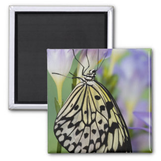 Sammamish, Washington. Tropical Butterflies 6 Square Magnet