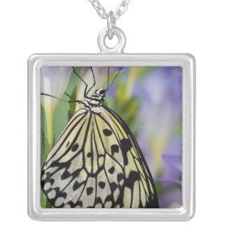 Sammamish, Washington. Tropical Butterflies 6 Square Pendant Necklace