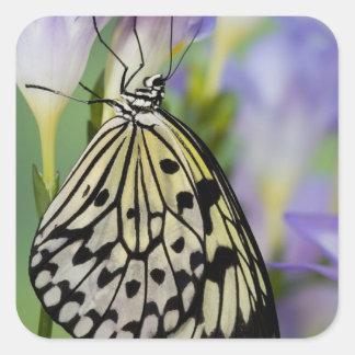 Sammamish, Washington. Tropical Butterflies 6 Square Sticker