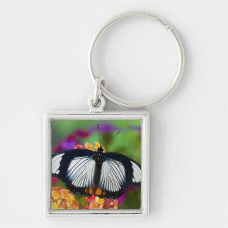 Sammamish, Washington. Tropical Butterflies 70 Key Ring