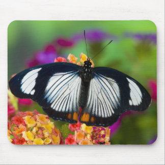 Sammamish, Washington. Tropical Butterflies 70 Mouse Mat