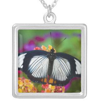 Sammamish, Washington. Tropical Butterflies 70 Square Pendant Necklace