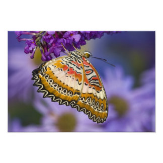 Sammamish, Washington. Tropical Butterflies 7 Photo Print