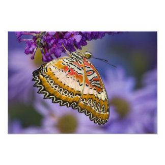 Sammamish, Washington. Tropical Butterflies 7 Photo Print