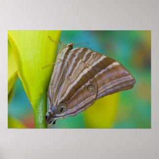 Sammamish, Washington. Tropical Butterflies 8 Poster