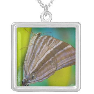 Sammamish, Washington. Tropical Butterflies 8 Square Pendant Necklace