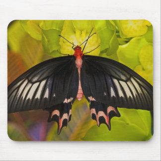 Sammamish, Washington. Tropical Butterflies 9 Mouse Mat