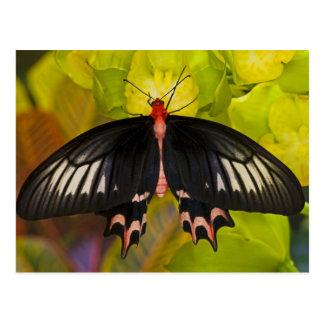 Sammamish, Washington. Tropical Butterflies 9 Postcard
