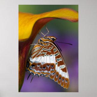 Sammamish, Washington. Tropical Butterflies 9 Poster