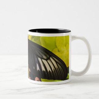 Sammamish, Washington. Tropical Butterflies 9 Two-Tone Coffee Mug