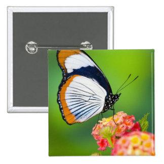 Sammamish, Washington. Tropical Butterflies Button