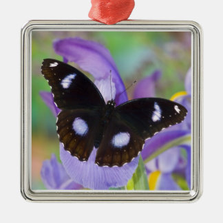 Sammamish Washington Tropical Butterflies Christmas Ornament