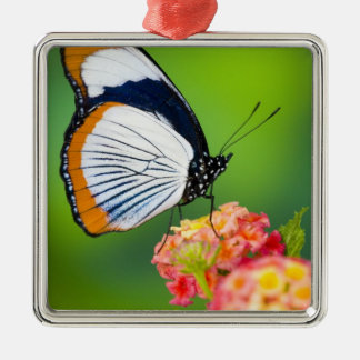 Sammamish, Washington. Tropical Butterflies Christmas Ornament