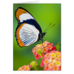 Sammamish, Washington. Tropical Butterflies Greeting Card